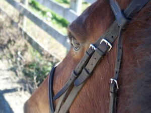 kenya bridle resized