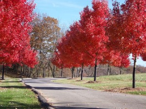 Red trees_resized