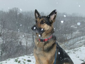 Snow_Dog_resized