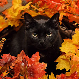 Halloween cat in leaves