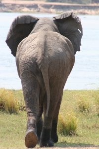 elephant--freeimage.com