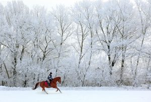 Woman riding horse on snowy path